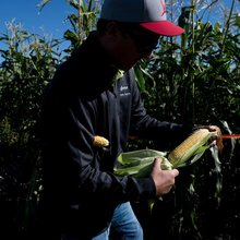 The making of super sweet corn: An American farm story