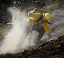 Horse death toll at 46 from Lilac Fire, California Diamond among the dead