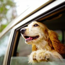 How dogs teach us to stop worrying and just be happy