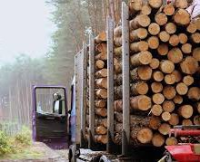 Timber REITs likely to see boost from Canada lumber tariff