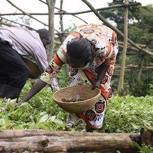 Farmer Field Schools Help Women Lead on Climate Change