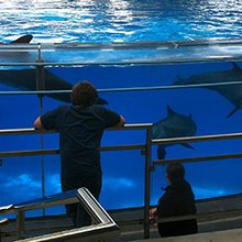 'Blackfish' casts long shadow as aquarium weighs retirement for dolphins