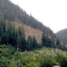 Stand by the plan for Tongass timber