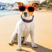 Dogs Reign in Santa Cruz