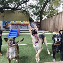 Something to Bark About: Eight Montrose Spots to Sniff Out During the Dog Days of Summer