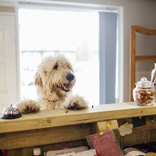 Choosing a Dog Hotel: 7 Things to Look For