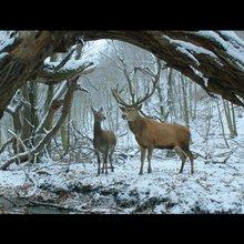 The mythical and the mundane: Ildikó Enyedi talks movies