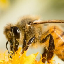 Free Cheerios Wildflower Seeds - How To Get Your Seeds And #BringBackTheBees