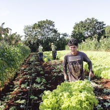 Sustainable Cuban Farming Model in a Gas-Driven World