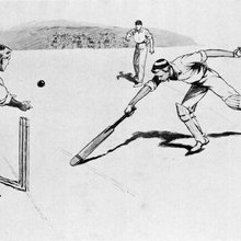 The cricket illustrator's art