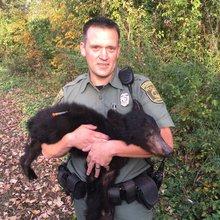 Injured bear captured next to Boulevard Bridge near Maymont