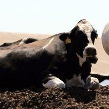 The Health Battle Behind America's Next Milk Trend