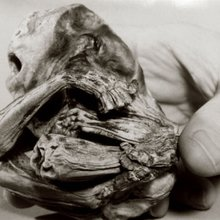 Meet Chiquita: A tiny, blonde, 500-year-old Wyoming mummy