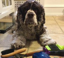 How to Groom Your Dog At Home - Fidose of Reality