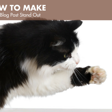 How to Make a Pet Blog Post Stand Out - BlogPaws