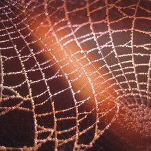 Device Spins Super-Strong Spider Silk That Could One Day Repair Nerves
