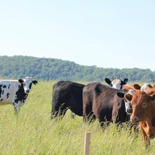 Preston farm focused on livestock's entire life cycle
