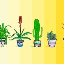 Plants to Detoxify Your Home | Reader's Digest