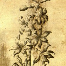 A coloring book is found at a botanical garden and it's 256 years old