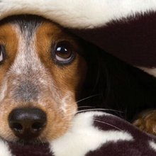 How to keep your dog safe and happy for the 4th of July!