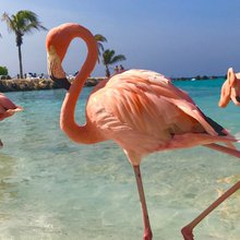 There's a small island in the Caribbean where you can frolic with flamingos