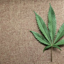 For venture firms, hope and anxiety surround legal cannabis market - PE Hub