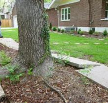Debate continues over Westwood Avenue trees