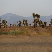 The Cactus Curtain splits a prickly pair: Lancaster and Palmdale