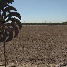 CA Farmers Make Record Revenues Despite Drought