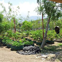 Haiti slum blooms into urban oasis