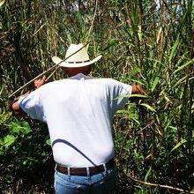 Alarm raised as mystery pest destroys Mississippi Delta marsh