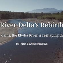 River Delta's Rebirth