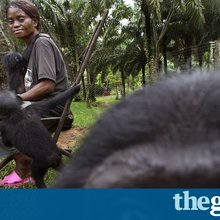 'Gorilla moms': The women rescuing Congo's endangered primates