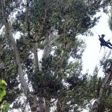 Local tree-climbing champion finds clarity in the branches