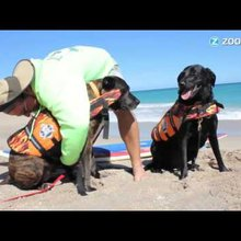 Surfing dogs: catching waves and wagging tails
