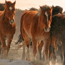 Wild horses, wildfire and wildlife: An overlooked ecological imbalance - Horsetalk.co.nz