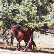 The three great myths about America's wild horses - Horsetalk.co.nz