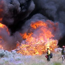 California wildfire disaster: New plan unveiled to save lives and natural resources - Horsetalk.c...
