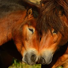Europe Plans for Eco-Friendly (Re)wild Horses on the Edge of the Landscape