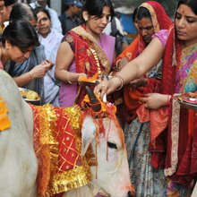 Growing beef trade hits India's sacred cow