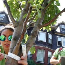 Watertown teens grow into tree lovers - The Boston Globe