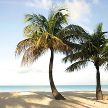 Planning A Destination Wedding in Antigua