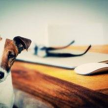 SCEMD: There is no SC law that forces hotels to take pets
