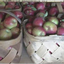 10 best Central Ohio orchards for apple-picking season