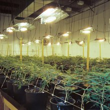 Can America's Weed Industry Provide Reparations for the War on Drugs? | VICE | United States