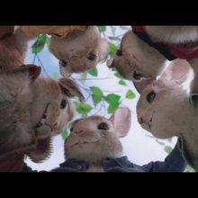 'Peter Rabbit' bounds onto the big screen - CNN Video
