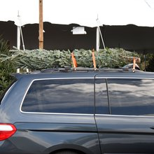 How to avoid a dangerous, costly mishap when transporting your Christmas tree
