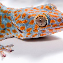 Gecko adhesion takes electric turn
