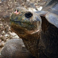 Galapagos Expedition Journal: Face to Face with Giant Tortoises