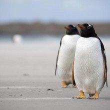 Falklands referendum: Cameron's new Dutch courage